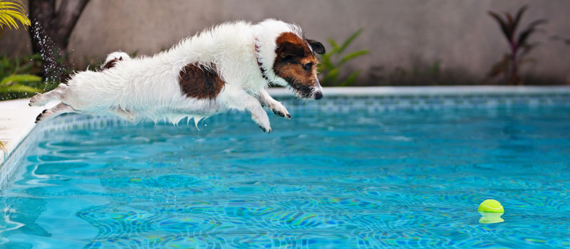 Is it Okay for Dogs to Get in Swimming Pools?