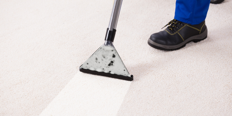 should take advantage of carpet cleaning specials